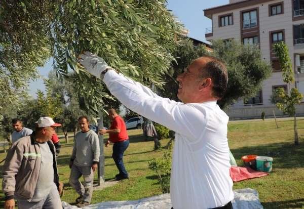 Turgutlu Belediyesi bin 442 kilogram zeytin yağı elde etti