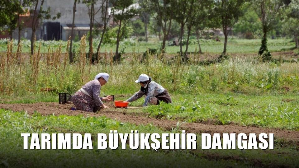 Tarımda Büyükşehir damgası