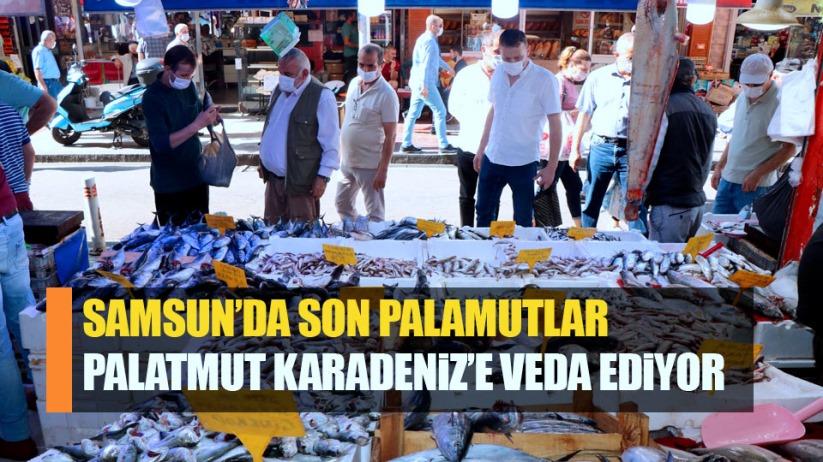 Samsun'da son palamutlar! Karadeniz'e 'veda' ediyor