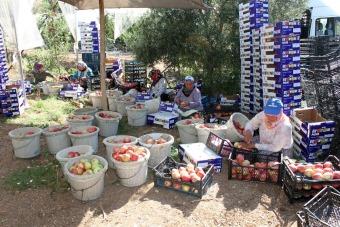 Köylüler, ihracat kapısını turfanda bodur elma ile araladı
