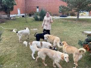 'Büyükşehir Belediyesi sokak hayvanlarına sahip çıkmıyor' iddiası