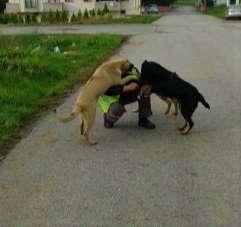 Sokak hayvanları kendileri besleyen belediye ekiplerini heyecanla karşıladı