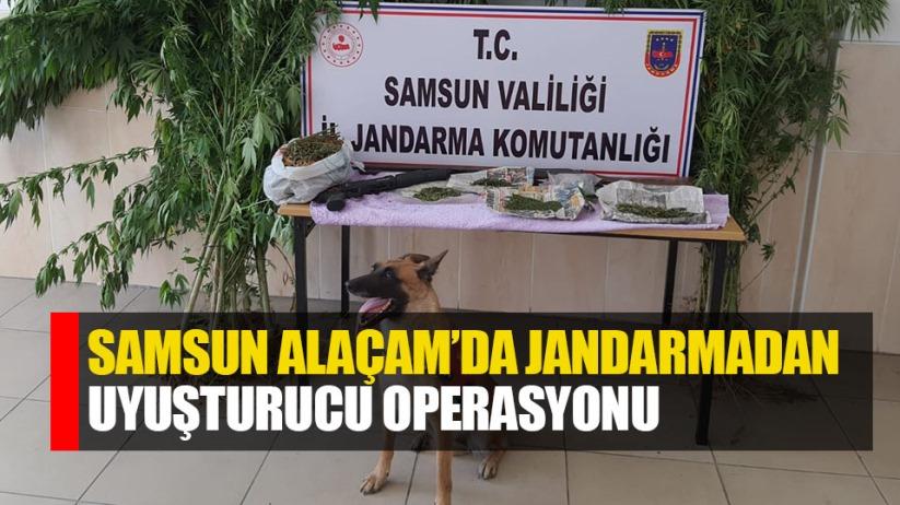 Samsun Alacam'da jandarmadan uyuşturucu operasyonu