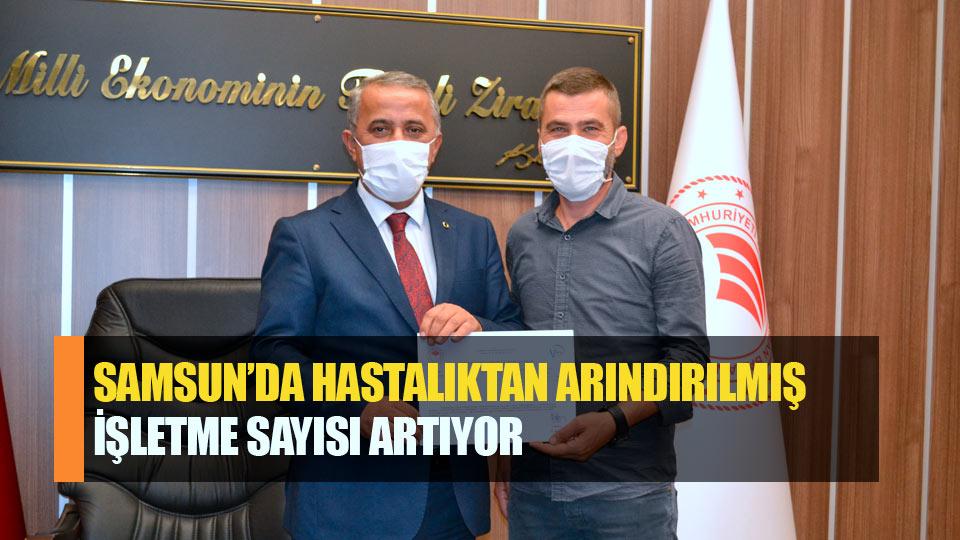 Samsun'da hastalıktan arındırılmış işletme sayısı artıyor