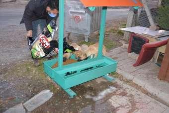 Ergani Belediyesi sokak hayvanlarını unutmadı