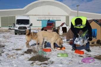 Odunpazarı Belediyesi sokakta yaşayan dostlarımızı unutmadı