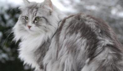 Kediler soğuktan nasıl korunur