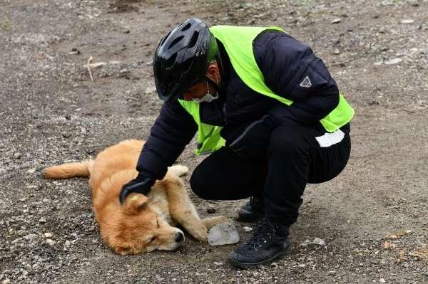 Ankara Büyükşehir Belediyesi sokak hayvanlarını unutmadı