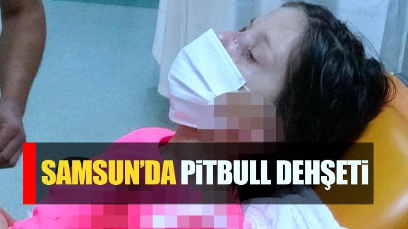 Samsun'da pitbull dehşeti! 11 yaşındaki kızı paramparça etti